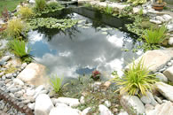 Water garden pond specialist maintenance services imas for Pond maintenance companies