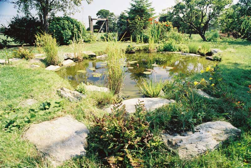 and Pond Portfolio  Imas Aquatics, Garden Pond and Garden Maintenance